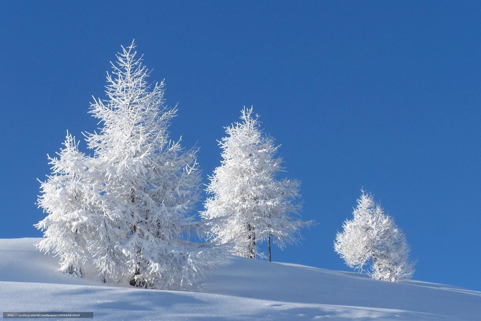 Scaricare gli sfondi inverno neve alberi natura sfondi for Sfondi gratis desktop inverno