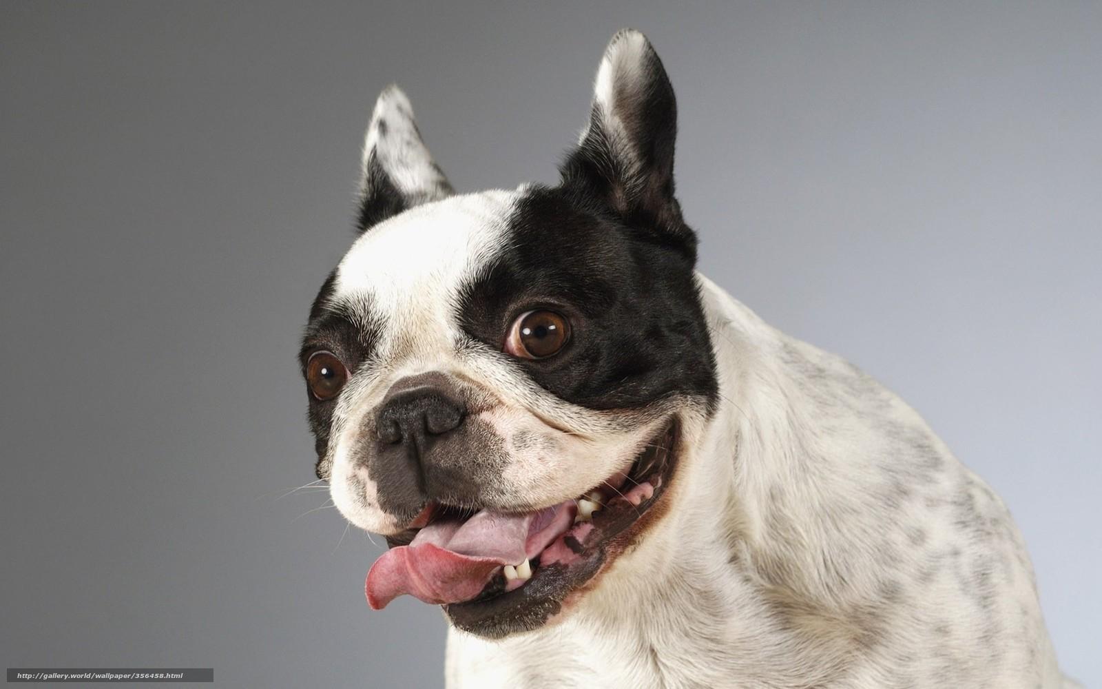 下载壁纸 狗,  语,  乐趣 免费为您的桌面分辨率的壁纸 1680x1050 — 图片 №356458