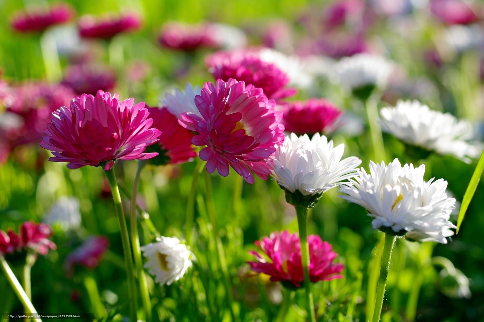 Tlcharger fond d 39 ecran fleurs printemps nature beaut for Sfondi desktop gratis primavera