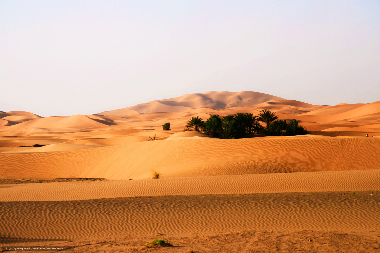oasis landscape wallpapers archives - photo #12