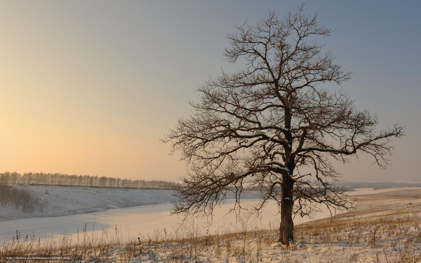 Scaricare gli sfondi inverno campo albero neve sfondi for Desktop gratis inverno
