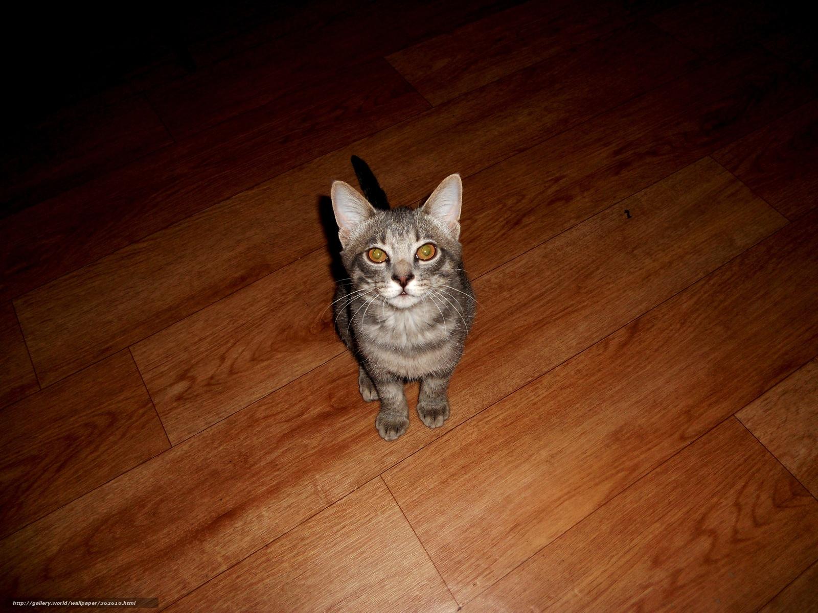 Скачать обои Кот,  обои,  животные,  серый кот бесплатно для рабочего стола в разрешении 4000x3000 — картинка №362610