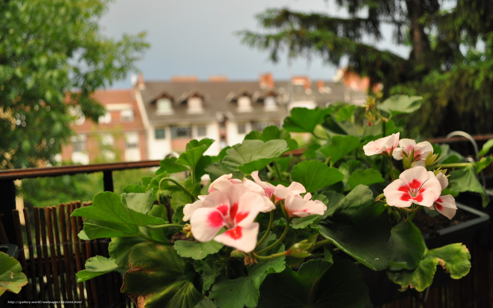Резултат со слика за photos of plantsflowers in your balkon