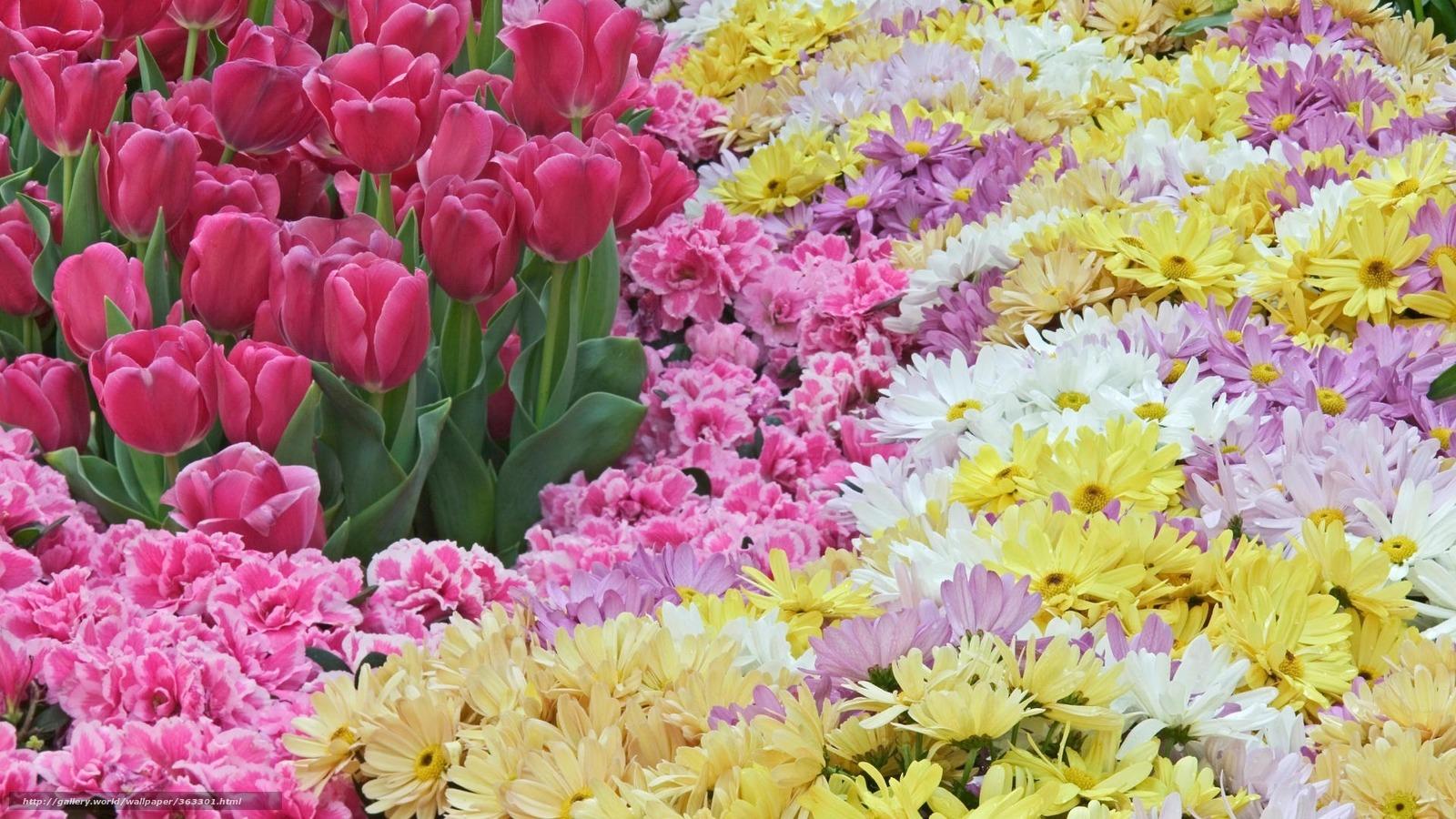 Tlcharger fond d 39 ecran fleurs printemps tulipes rose for Sfondi desktop primavera gratis