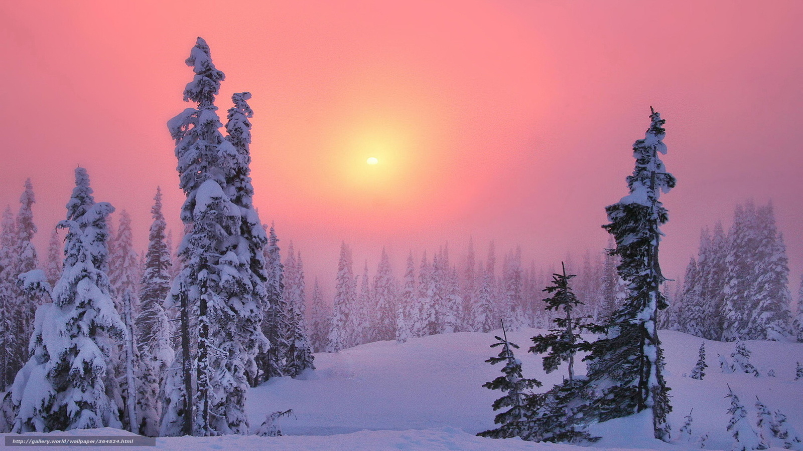 Download Wallpaper Forest Winter Snow Taiga Free