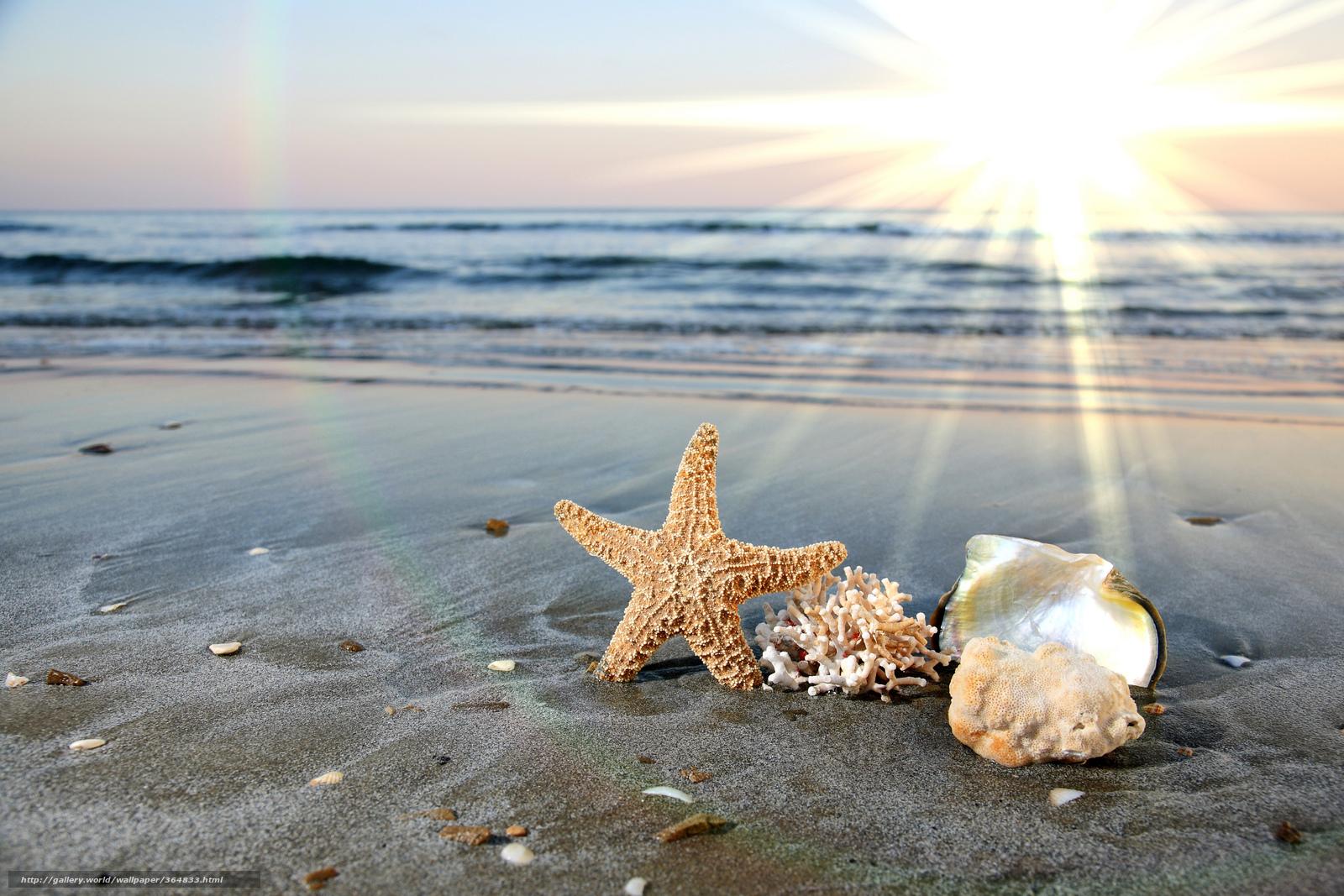 Scaricare Gli Sfondi Conchiglie Stella Di Mare Mare Oceano Sfondi