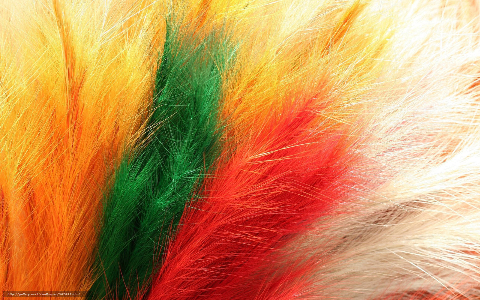 Download Wallpaper Feathers Color Yellow Orange Free