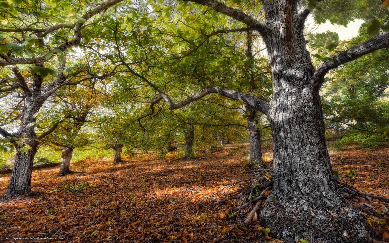 Download wallpaper tree,  leaves,  forest,  nature free desktop wallpaper in the resolution 1680x1050 — picture №368227