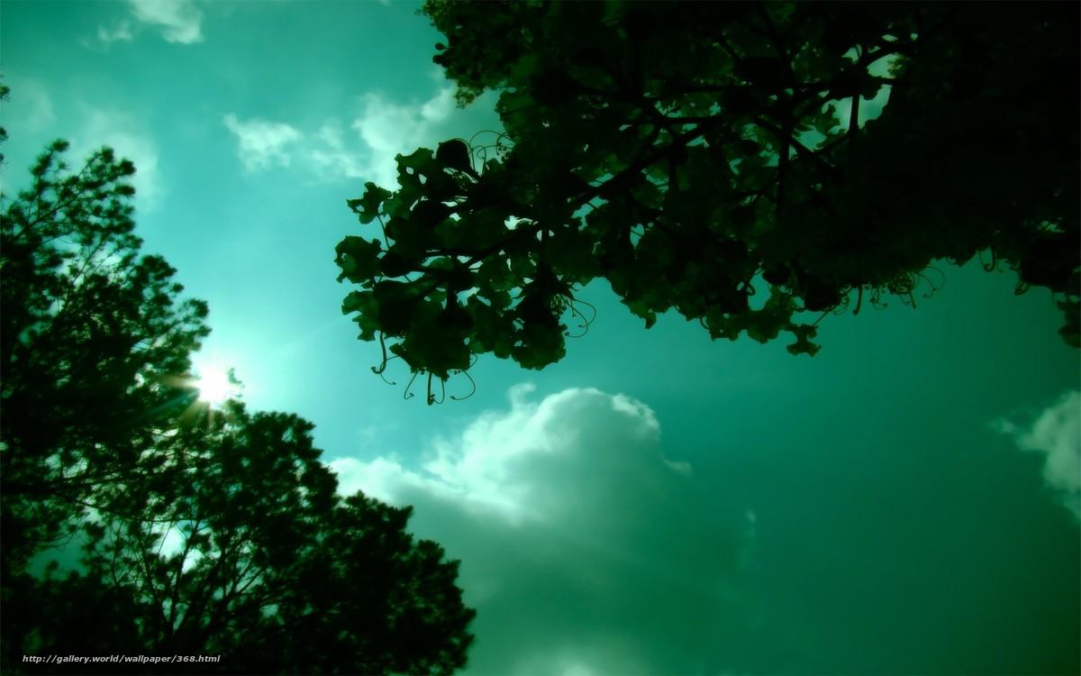 Скачать обои настроение,  небо,  зелень,  солнце бесплатно для рабочего стола в разрешении 1920x1200 — картинка №368