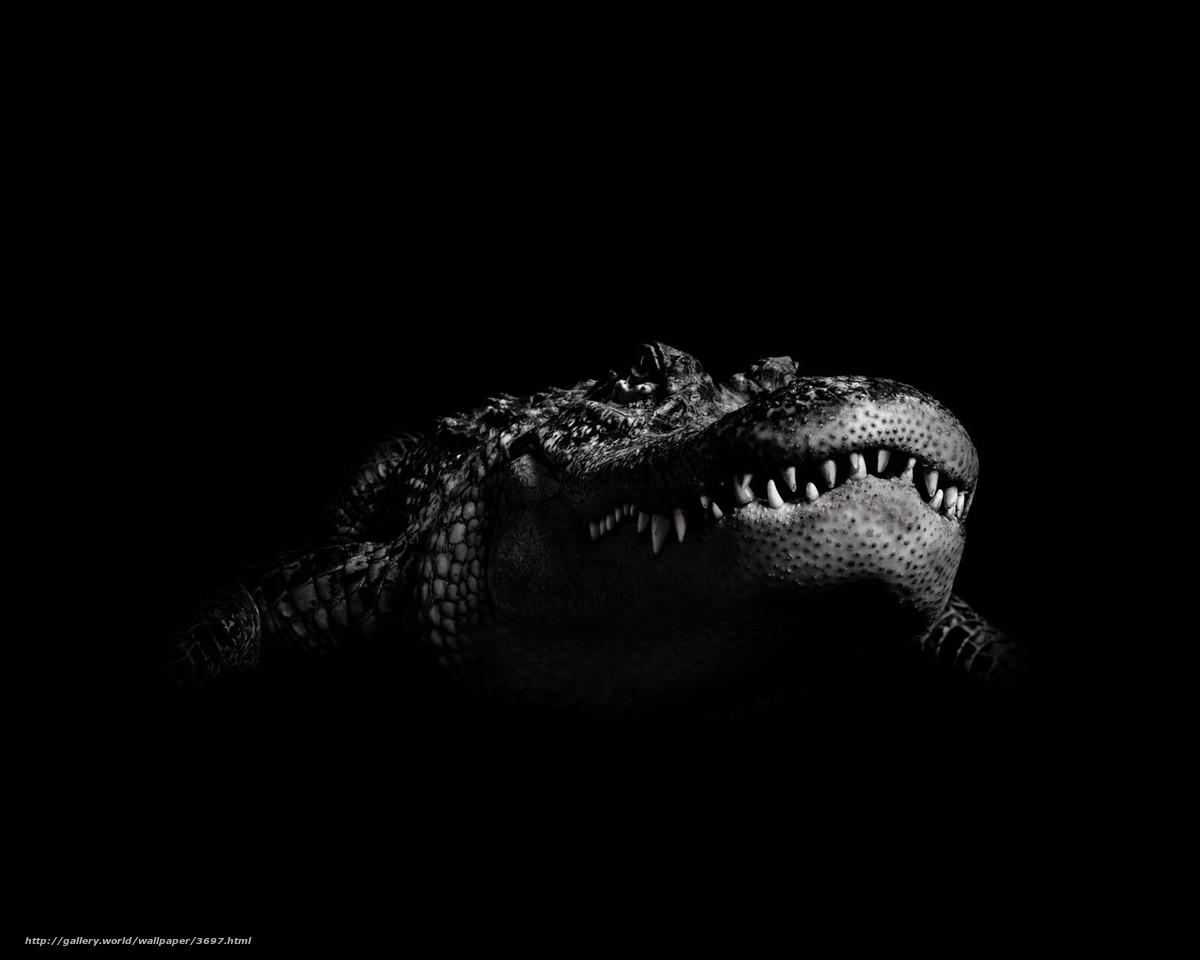 Крокодил фото картинки