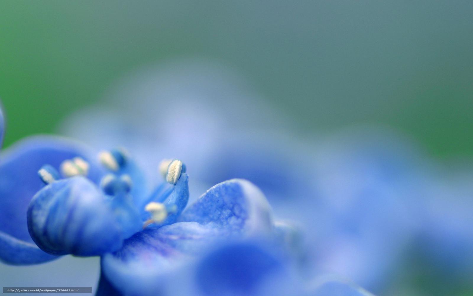 tlcharger fond d 39 ecran fleur bleu bleu couleur fonds d 39 ecran gratuits pour votre rsolution du. Black Bedroom Furniture Sets. Home Design Ideas