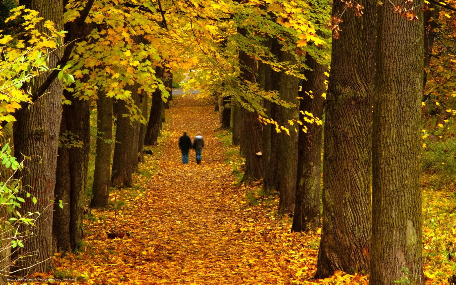 Фото девушка осень золотая