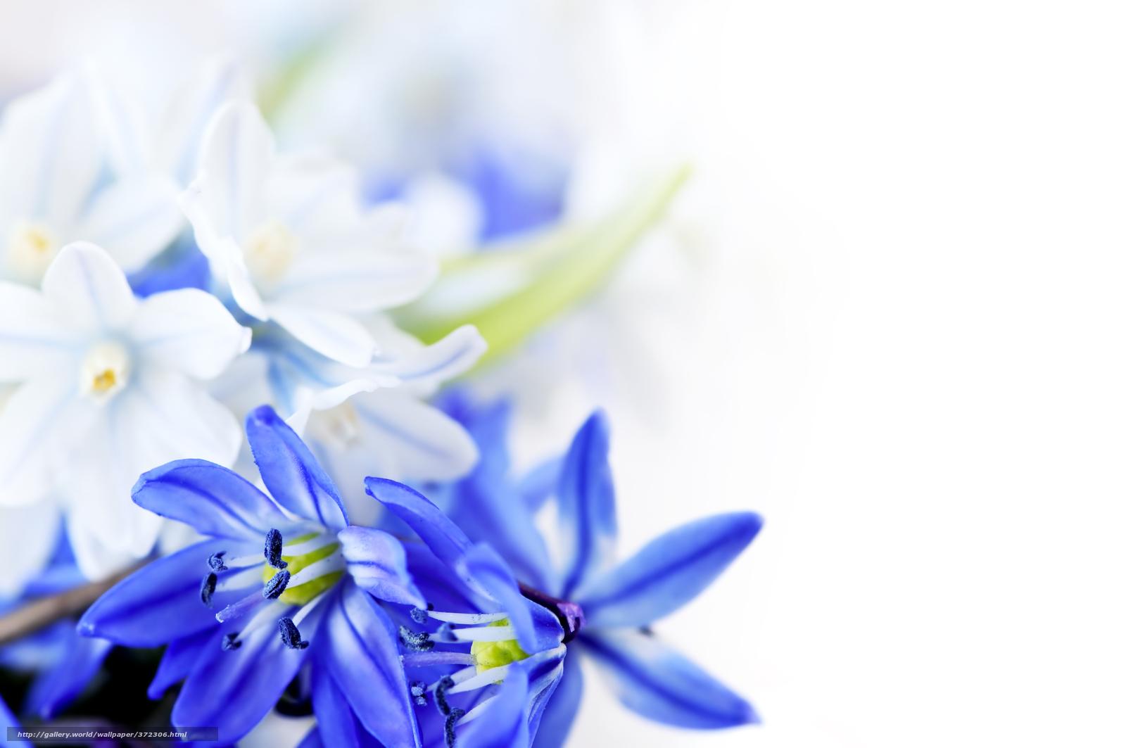 Скачать обои цветы,  синие цветы,  листки бесплатно для рабочего стола в разрешении 8500x5646 — картинка №372306