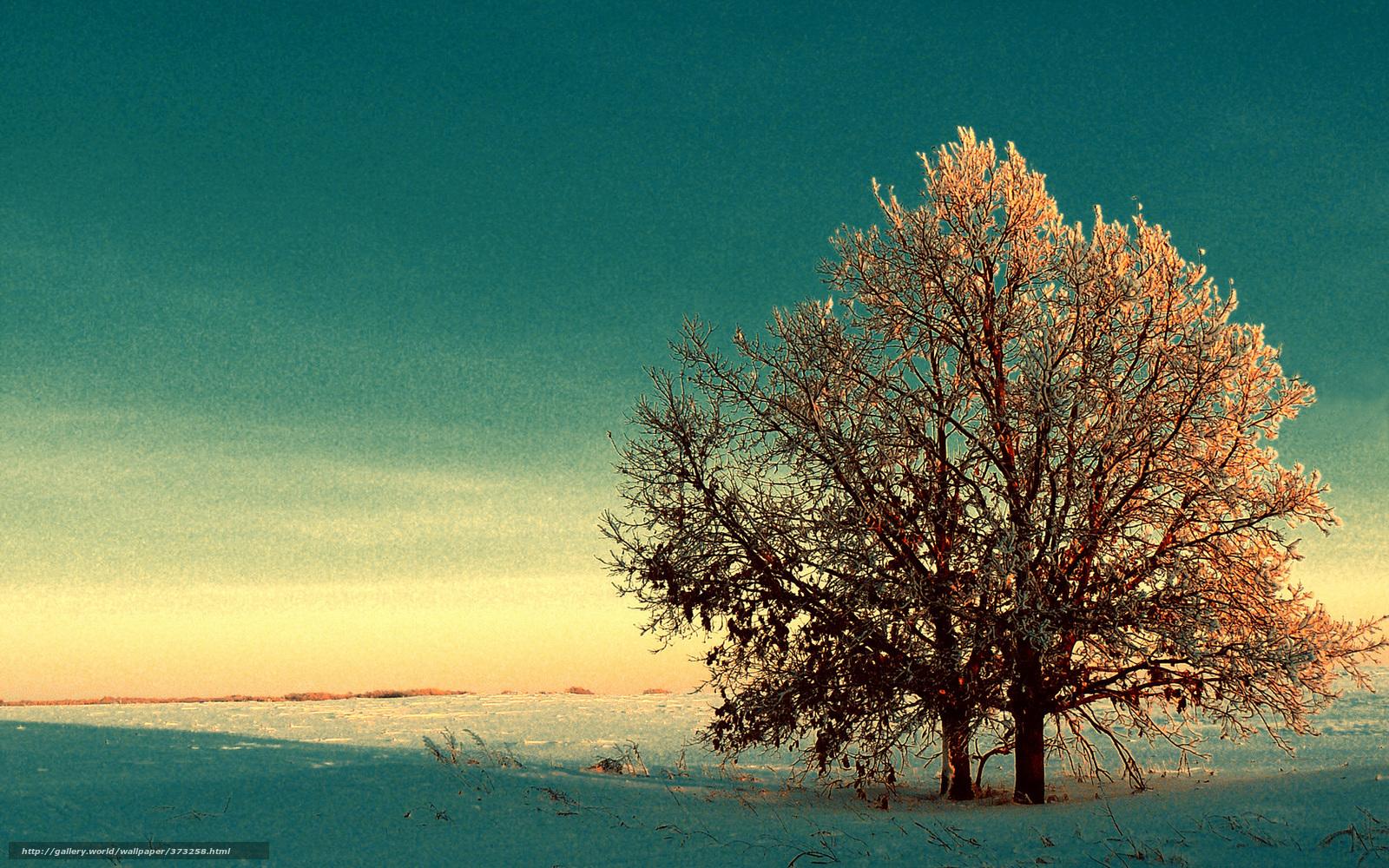 Scaricare gli sfondi inverno neve alberi fogliame di for Foto per desktop gratis autunno