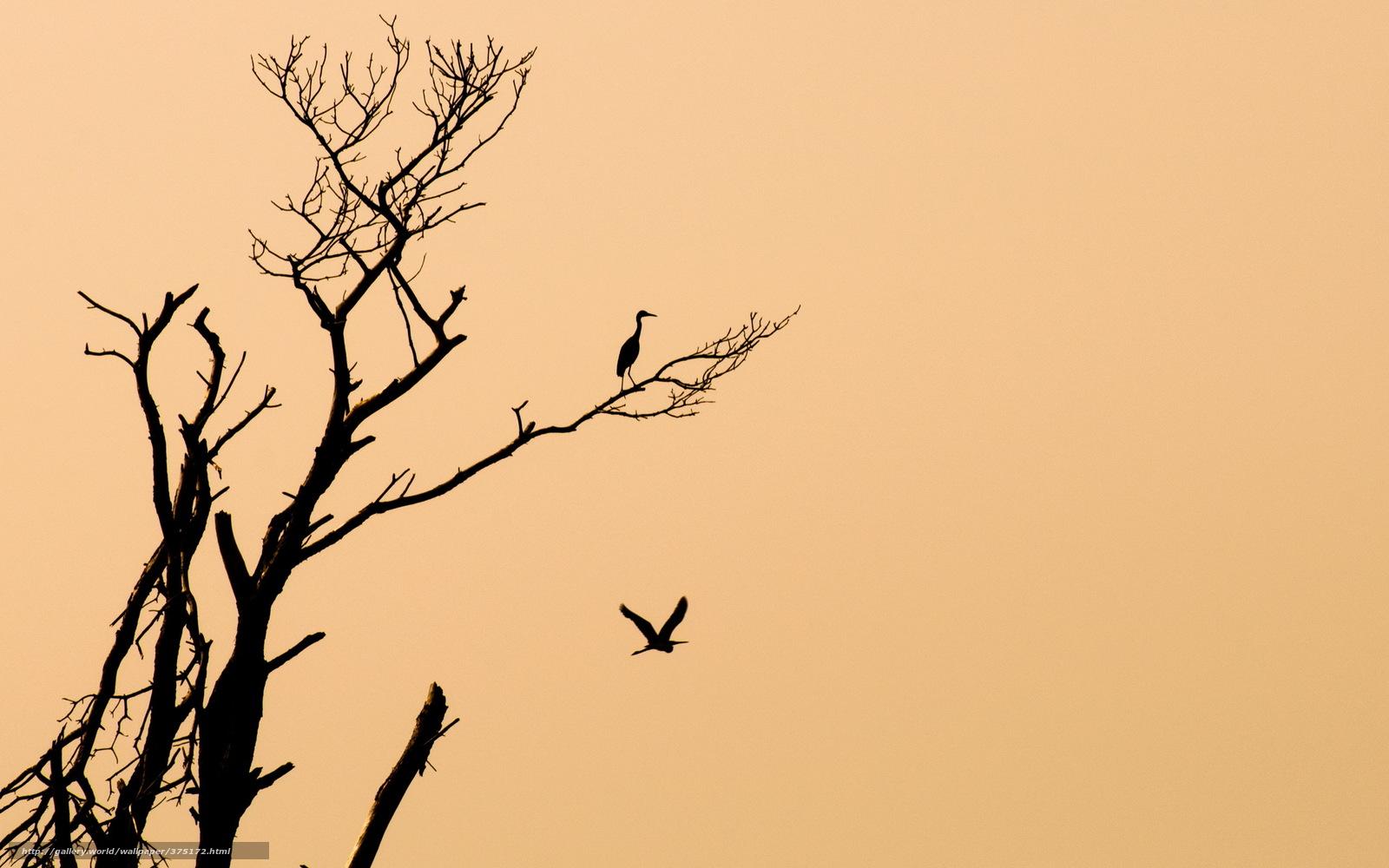 Download Wallpaper Birds Tree Minimalism Background