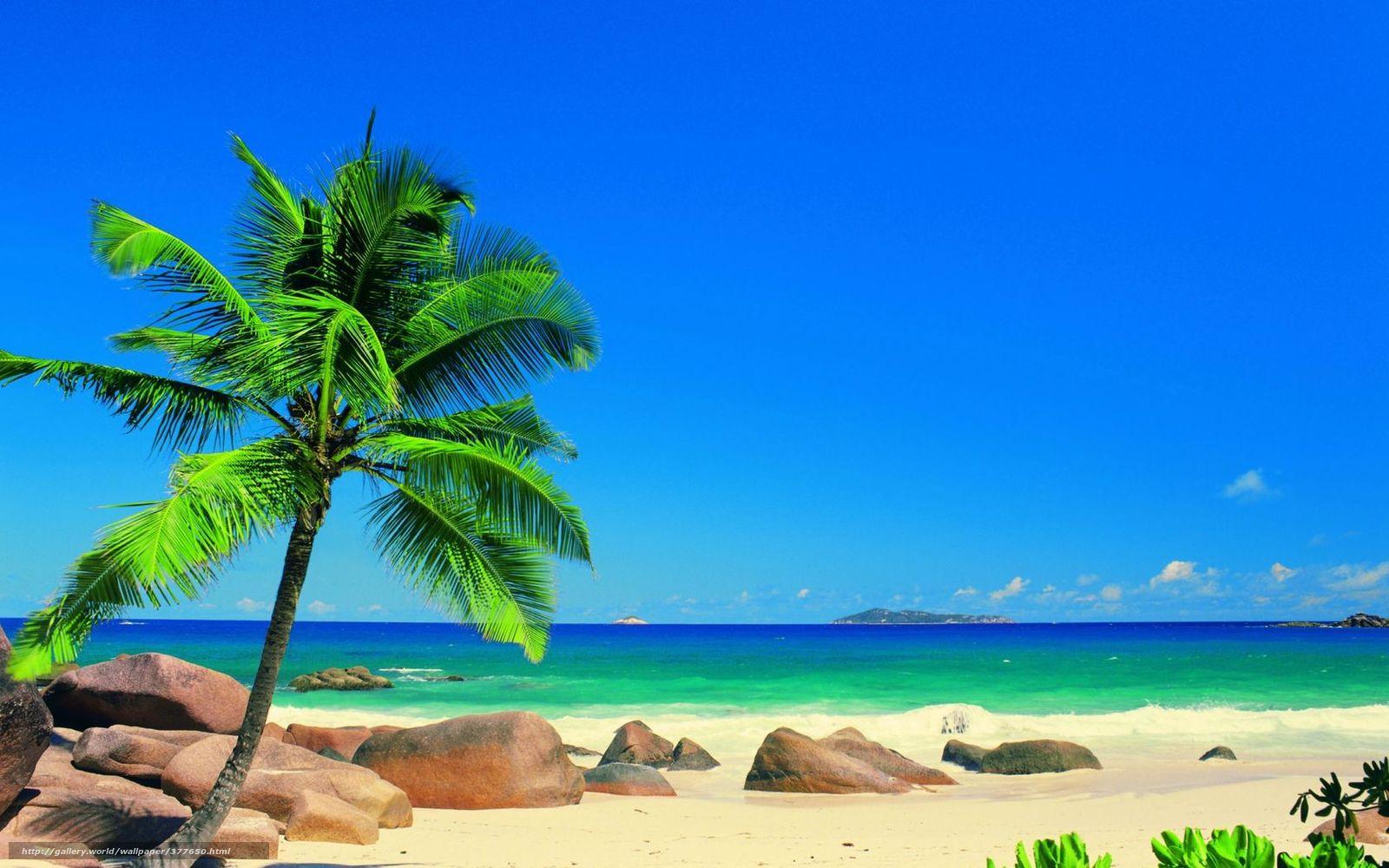 Scaricare Gli Sfondi Estate Sole Palma Oceano Sfondi Gratis Per