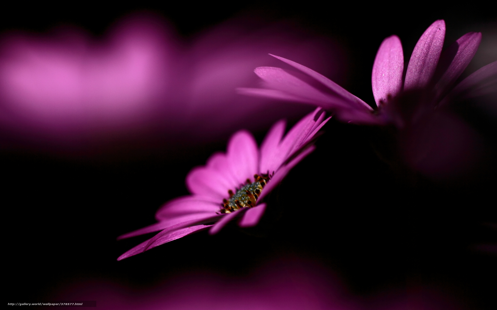 Обои Цветы На Черном Фоне Бесплатно