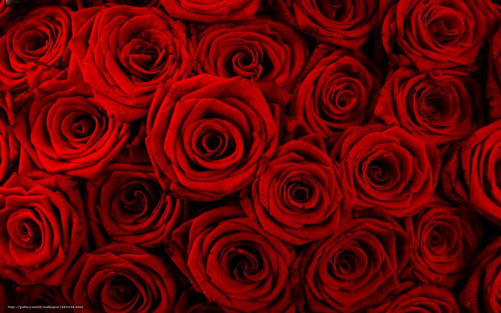 download hintergrund blumen rose rote rosen knospen freie desktop tapeten in der auflosung. Black Bedroom Furniture Sets. Home Design Ideas