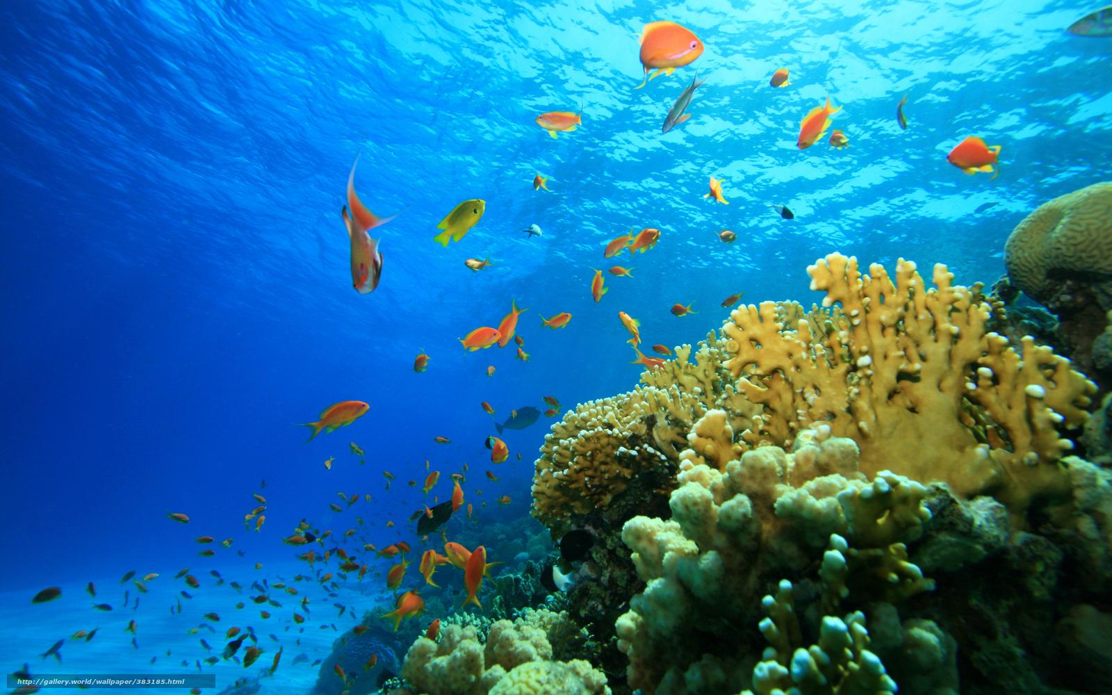 Download Hintergrund Meer Fisch Riff Freie Desktop