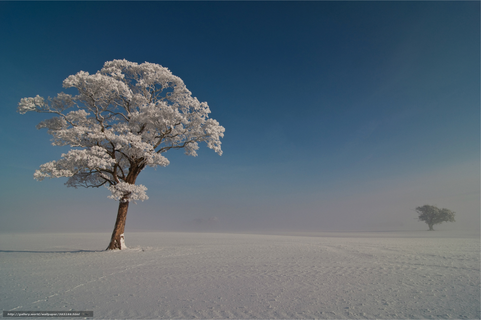 Download wallpaper Winter,  Trees,  frost,  snow free desktop wallpaper in the resolution 4000x2657 — picture №383188