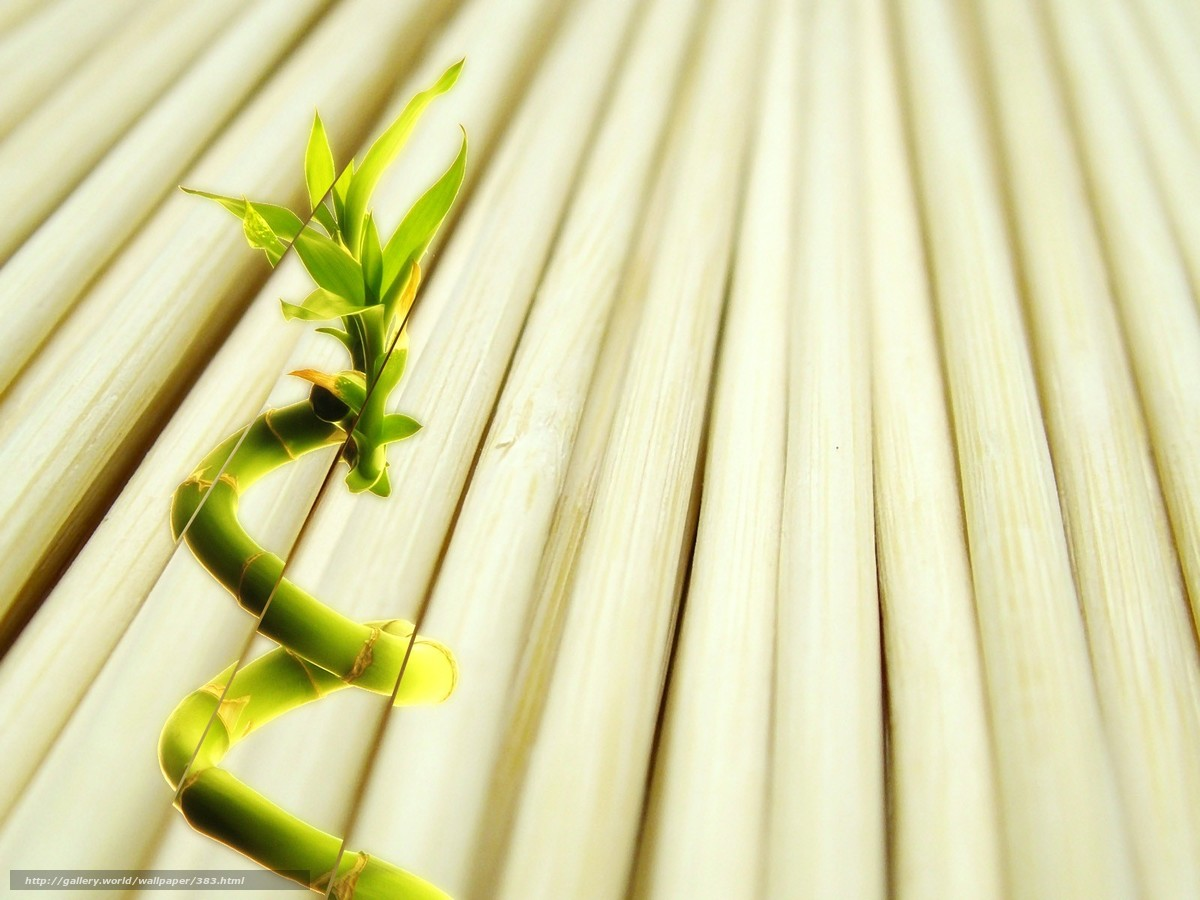 Скачать обои дерево,  белый,  росток бесплатно для рабочего стола в разрешении 1600x1200 — картинка №383