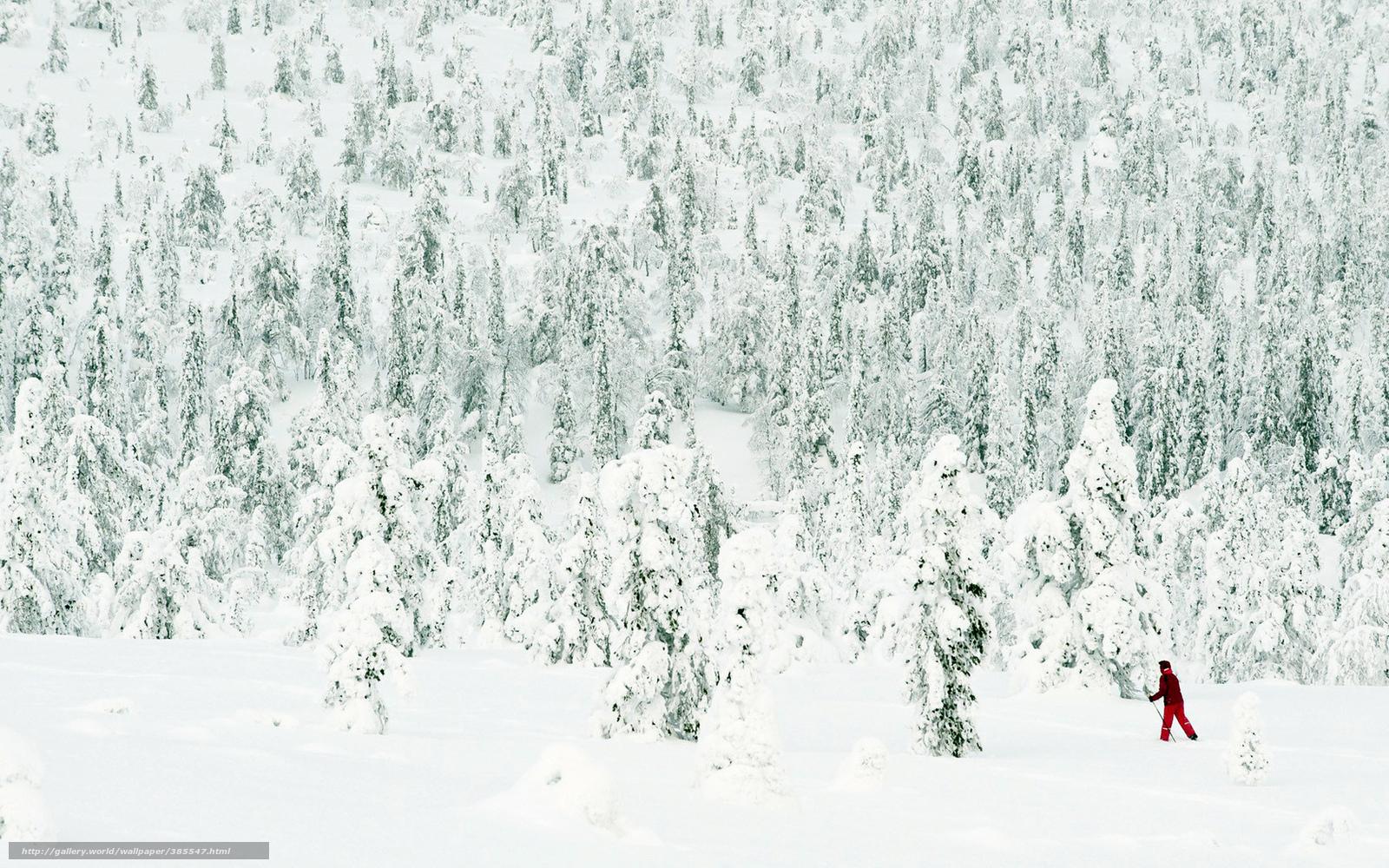 Tlcharger Fond d'ecran neige,  hiver,  fort,  arbres Fonds d'ecran gratuits pour votre rsolution du bureau 1680x1050 — image №385547
