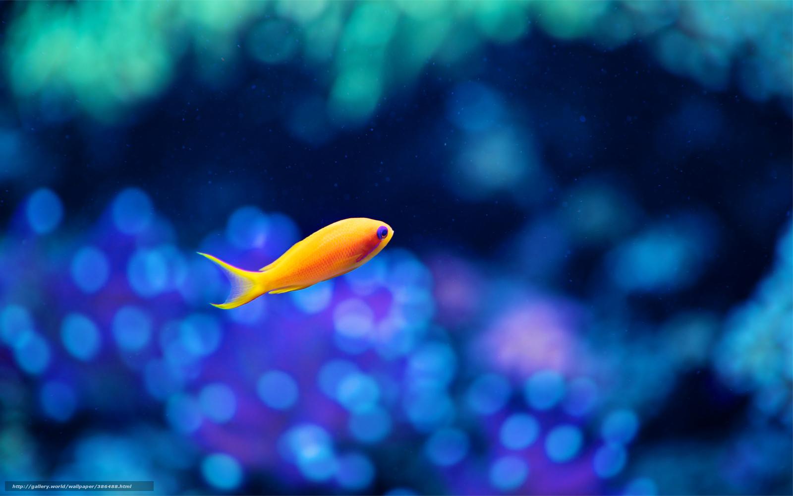Tlcharger fond d 39 ecran poisson les petits poissons jaune for Fond ecran aquarium