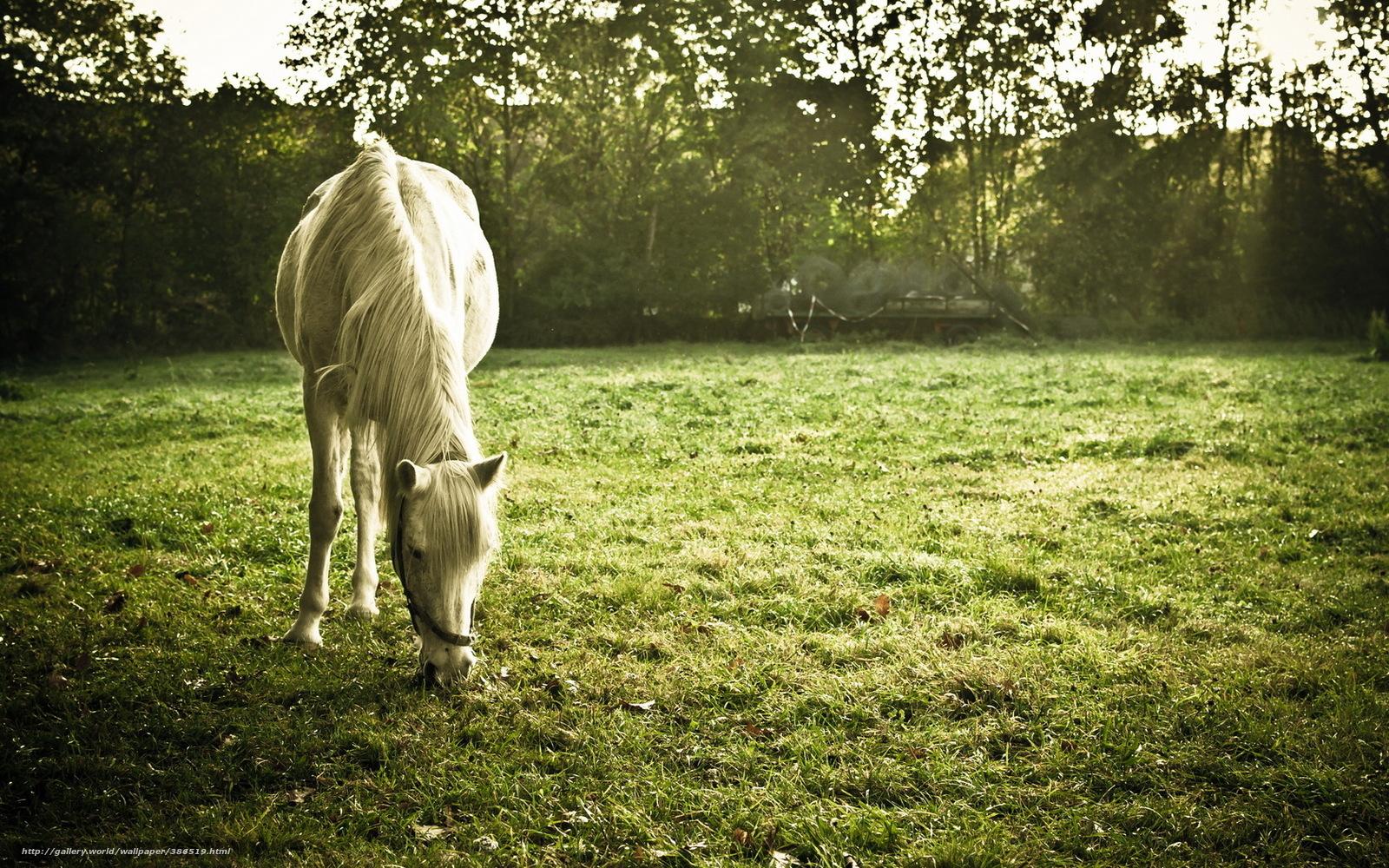 Download Wallpaper Horse, Field, Summer Free Desktop