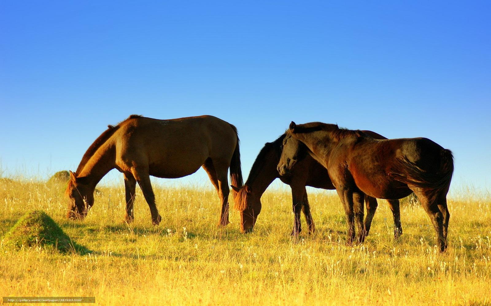 Download Wallpaper Horses, Field, Summer Free Desktop