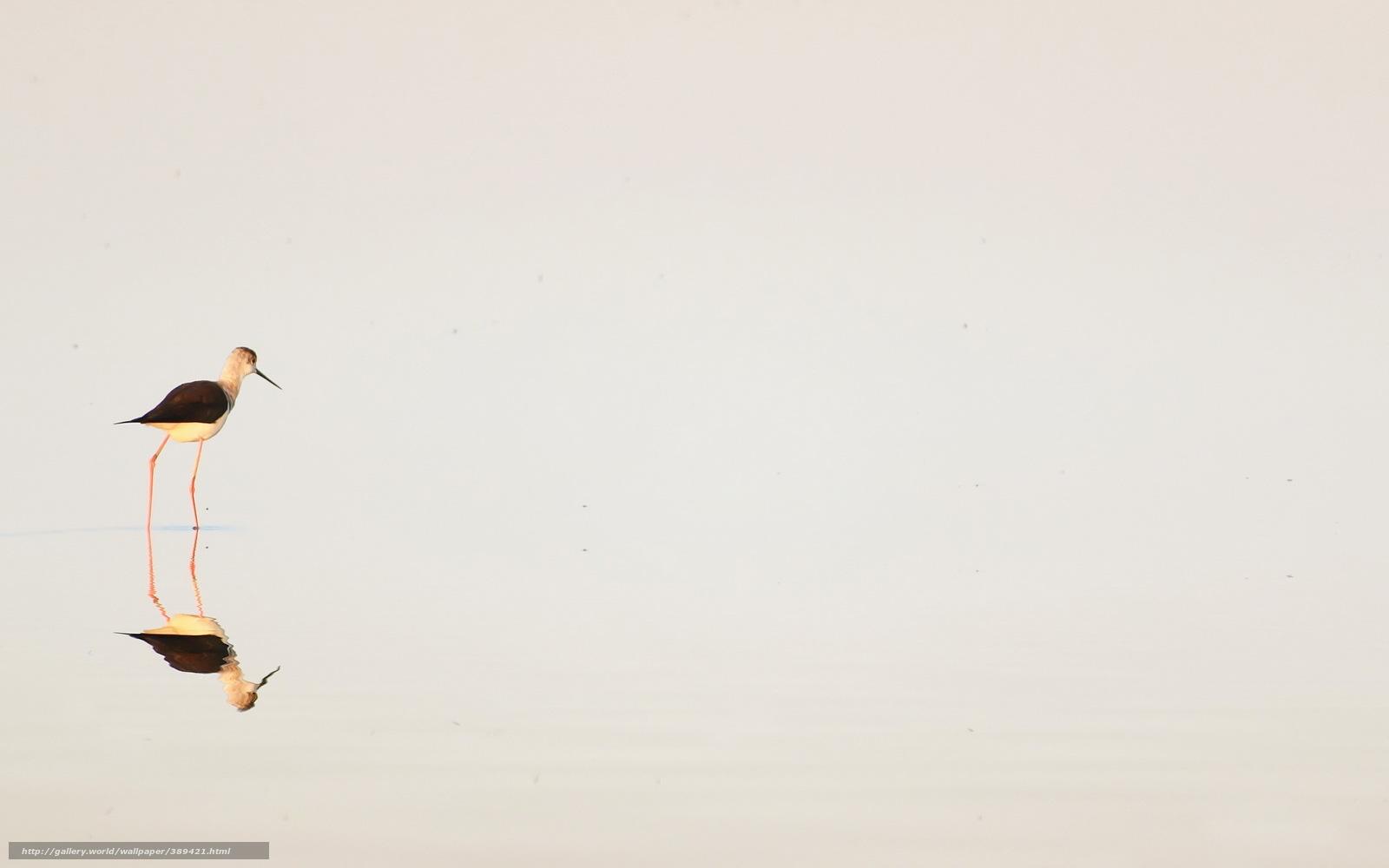 Amazing Wallpaper Bird Minimalist - 389421_ptica_voda_minimalizm_priroda_2560x1600_www  Graphic_737044.jpg