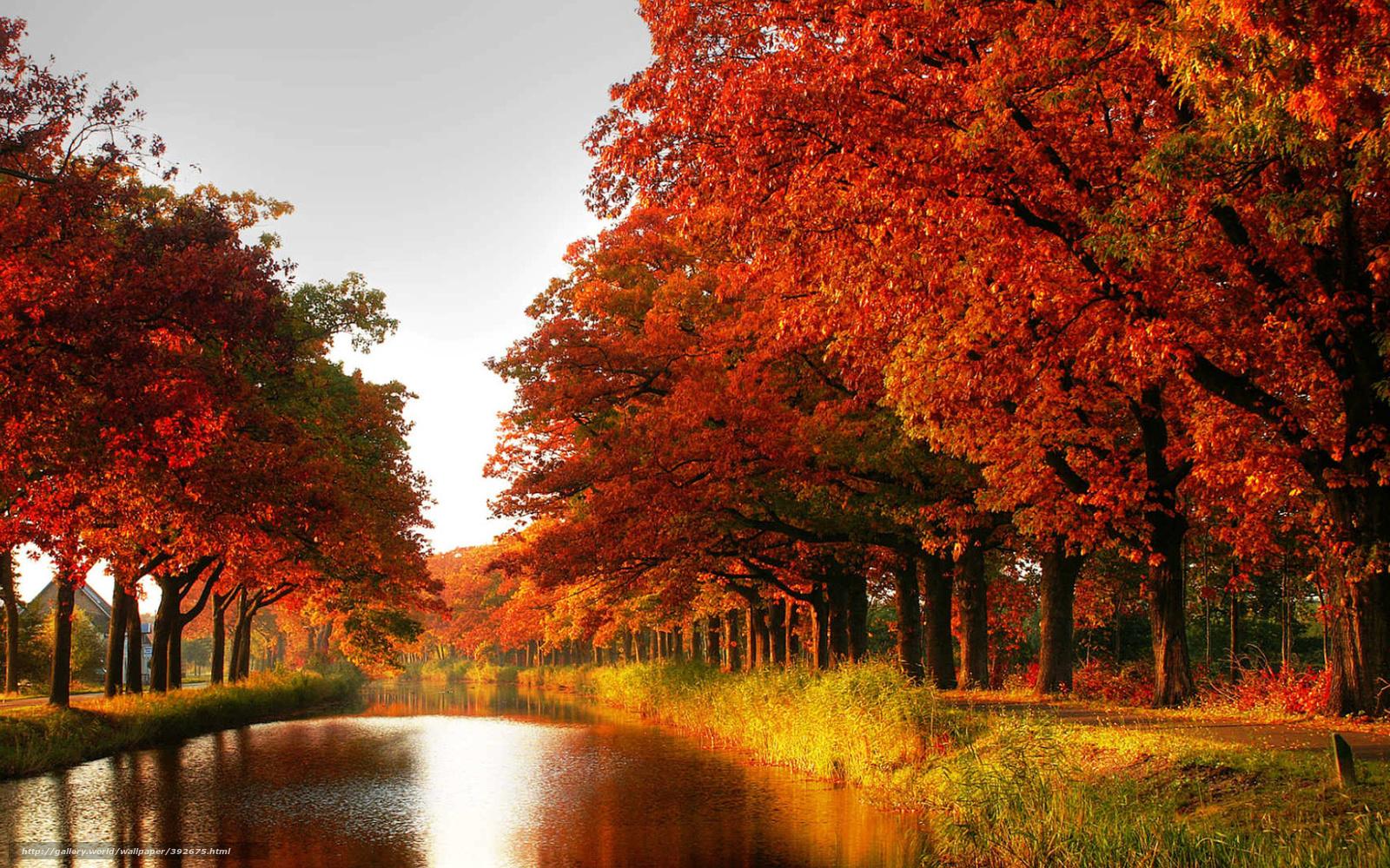 scaricare gli sfondi canale autunno alberi sfondi gratis