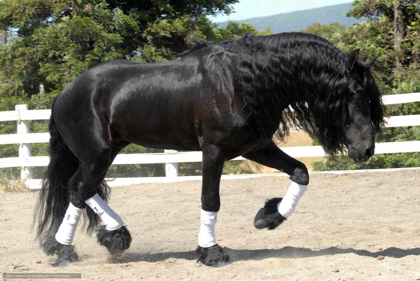 Download wallpaper horse,  horse,  frieze,  stallion free desktop wallpaper in the resolution 1920x1286 — picture №393432