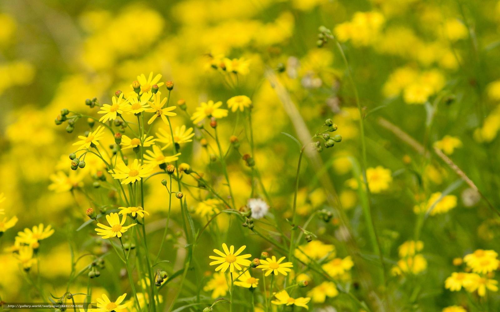 Полевые желтые цветы на