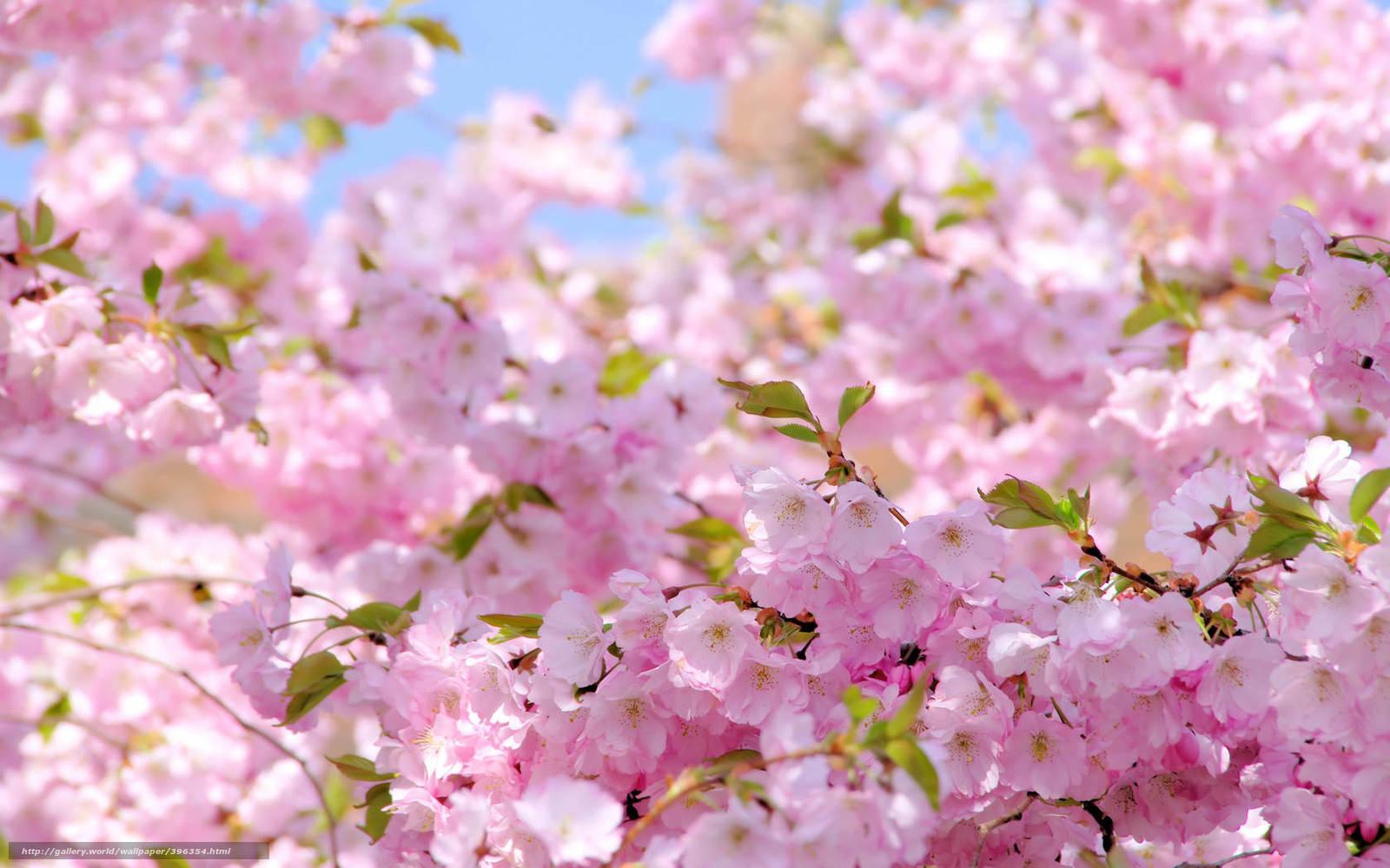 tlcharger fond d 39 ecran printemps soleil fleurir sakura fonds d 39 ecran gratuits pour votre. Black Bedroom Furniture Sets. Home Design Ideas