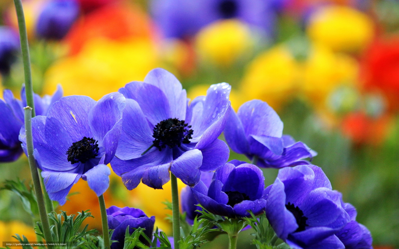 Scaricare gli sfondi fiori estate natura sfondi gratis for Immagini per desktop fiori