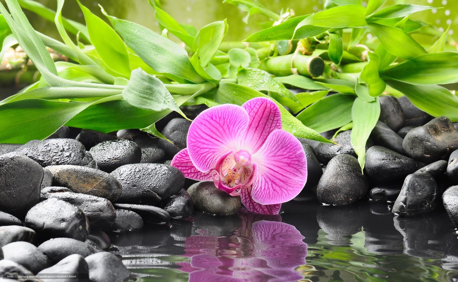 Wallpaper orchidee steine  Download Hintergrund Orchidee, Blume, Steine, schwarz Freie ...