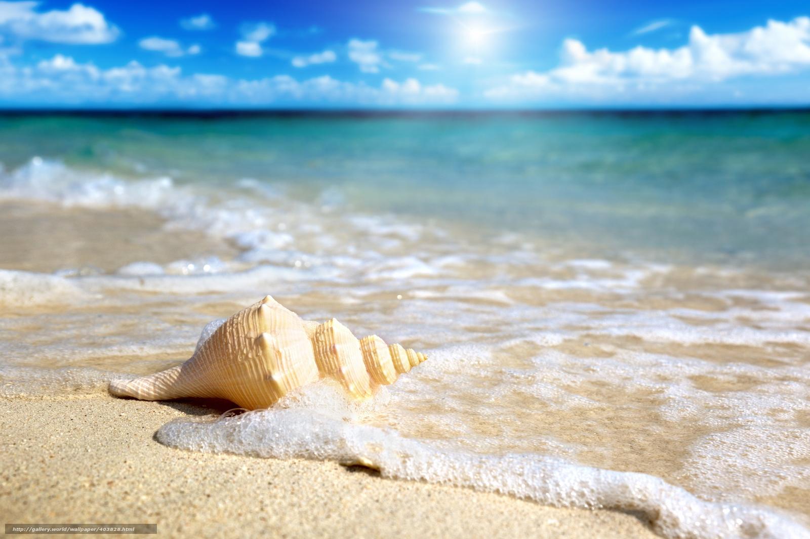 Scaricare Gli Sfondi Conchiglia Navigare Sabbia Mare Sfondi
