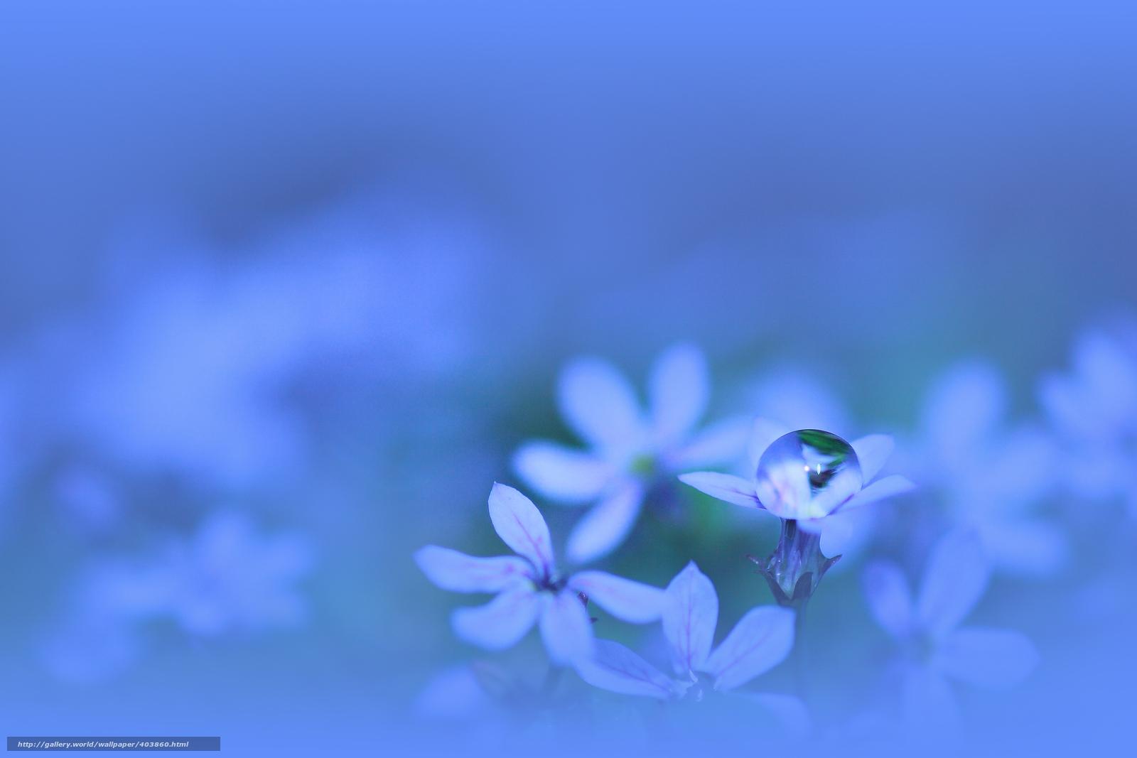 Scaricare Gli Sfondi Fiori Blu Blu Petali Sfondi Gratis Per La