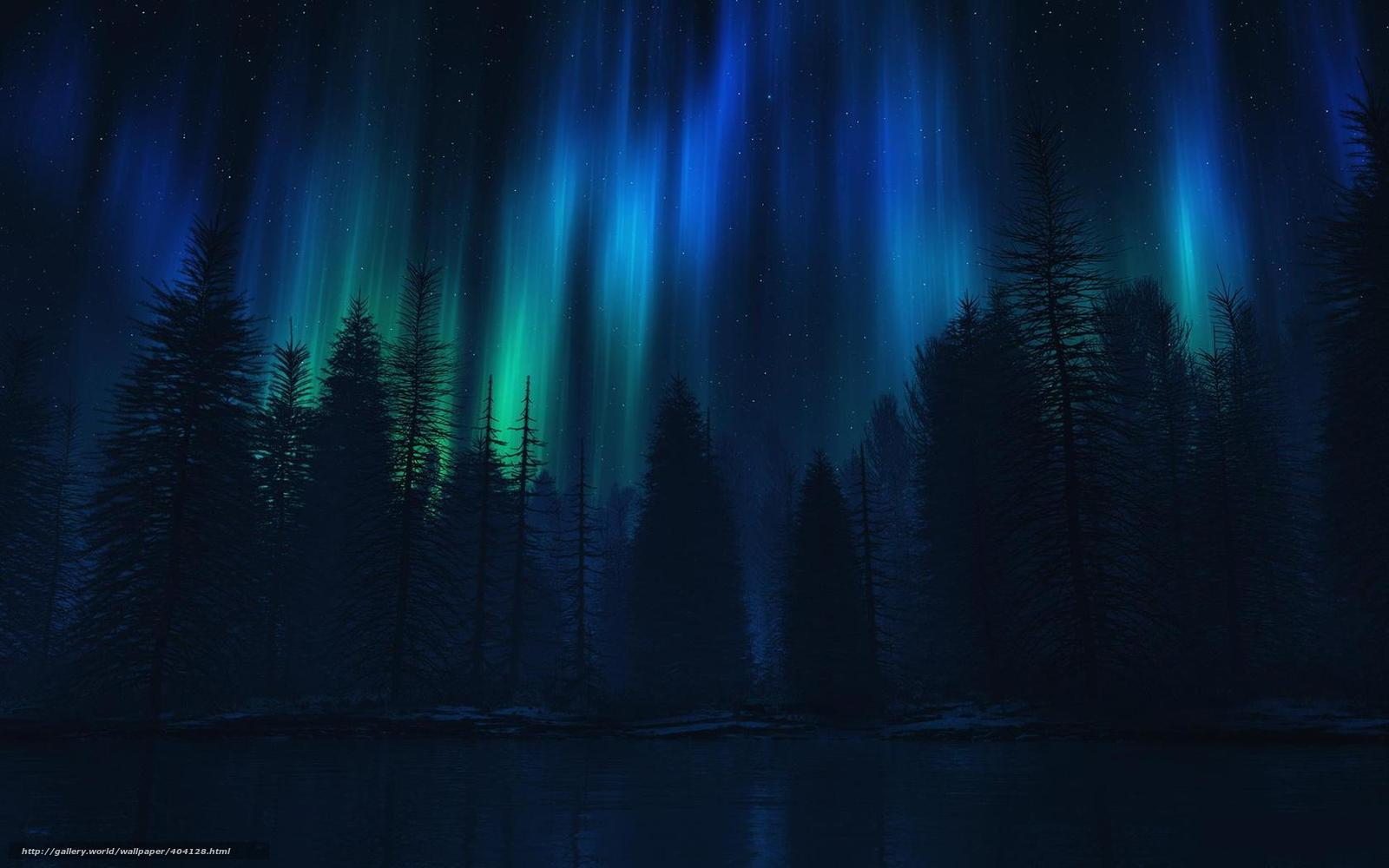 Download wallpaper forest,  Trees,  night,  radiance free desktop wallpaper in the resolution 1680x1050 — picture №404128
