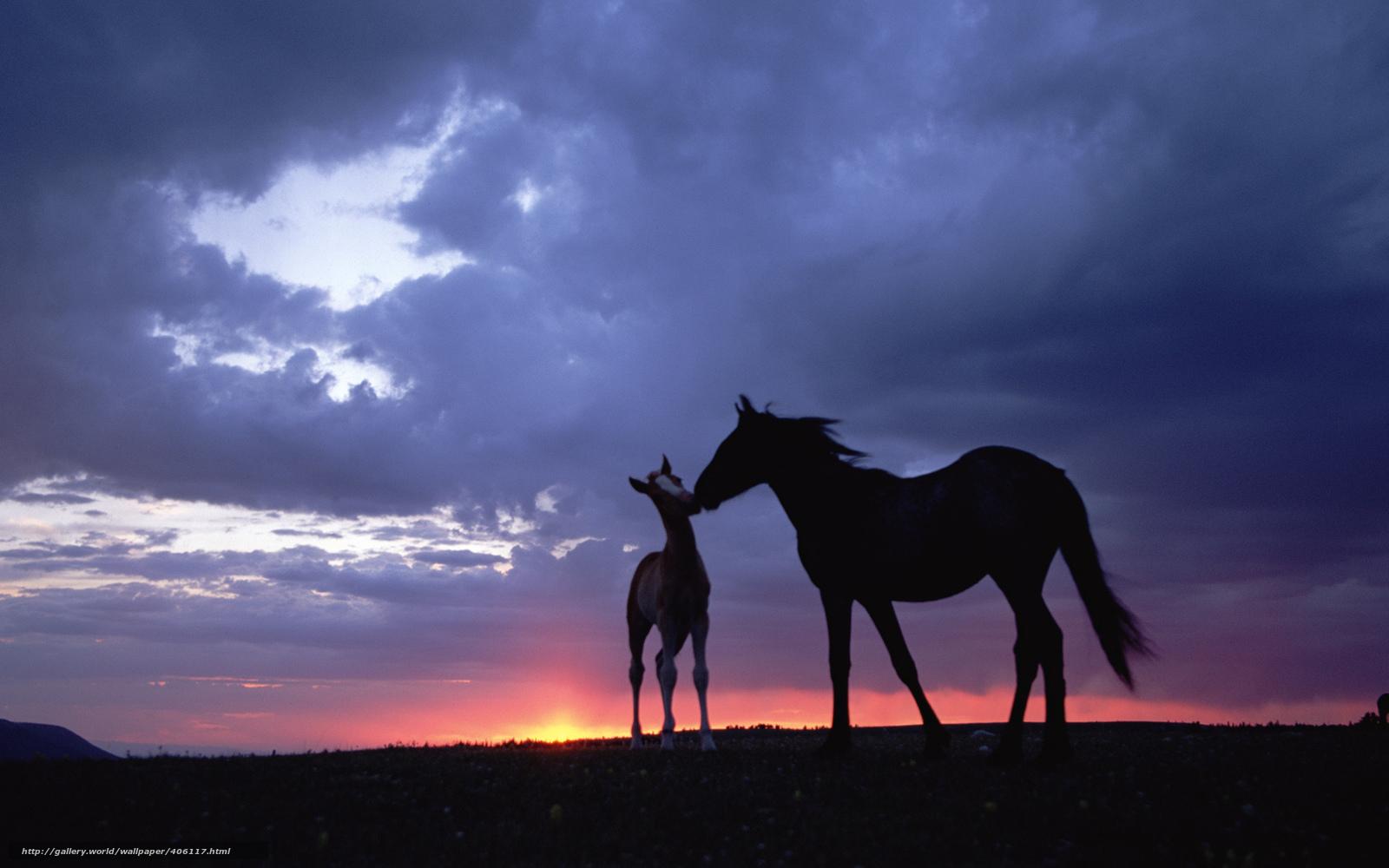 download hintergrund pferd sonnenuntergang himmel freie