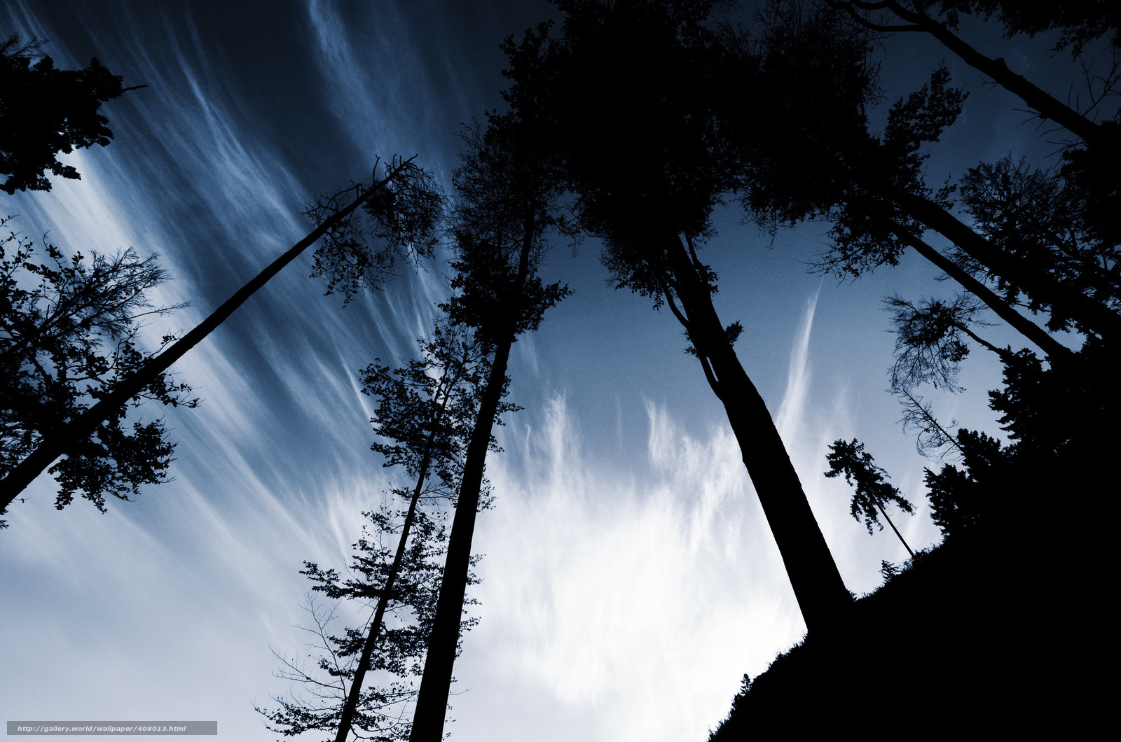 Download wallpaper Trees,  trunks,  sky,  hill free desktop wallpaper in the resolution 2000x1325 — picture №408013