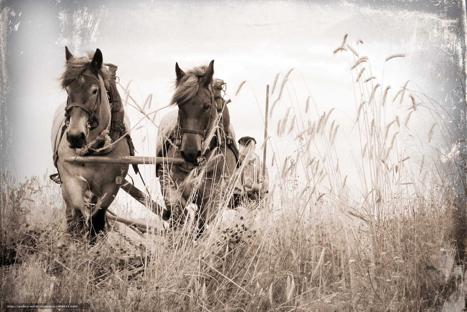 Free Desktop Wallpaper Horses