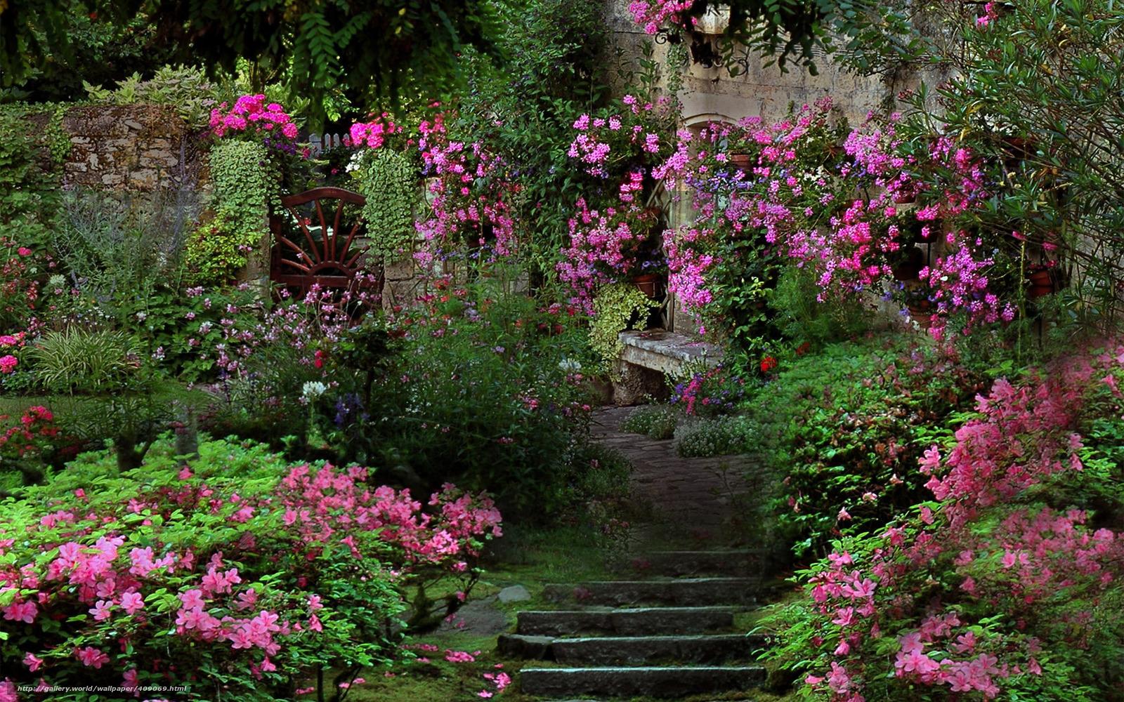 Tlcharger Fond d'ecran jardin, chelle, Fleurs, rose Fonds ...