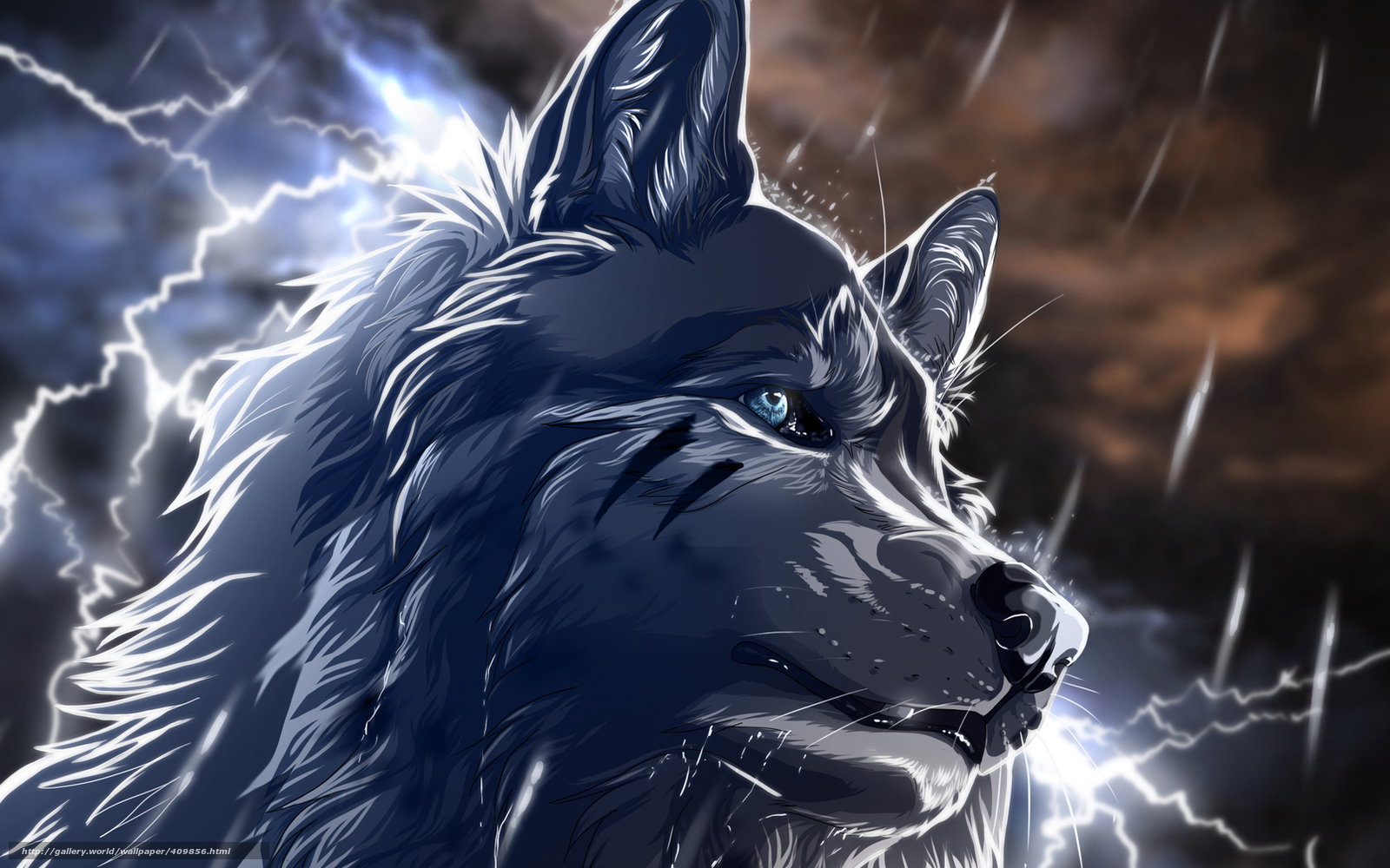 Download wallpaper wolf,  rain,  Lightning,  night free desktop wallpaper in the resolution 1680x1050 — picture №409856