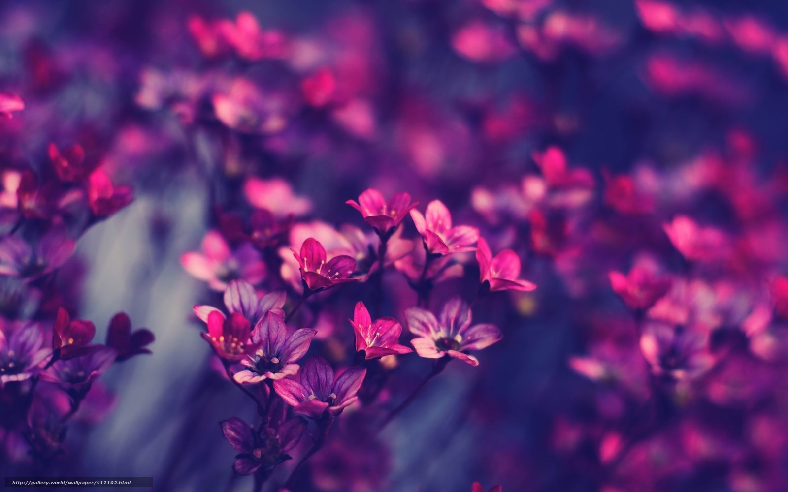 tlcharger fond d'ecran fleurs, beau, violet, rose fonds d'ecran