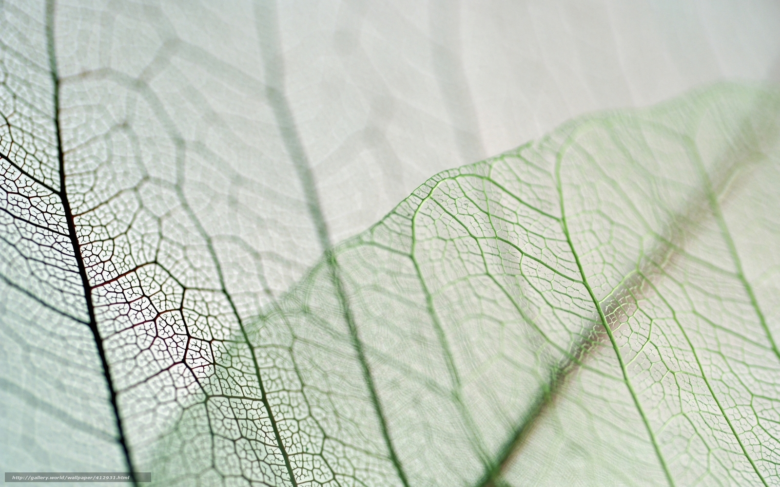 Download Wallpaper 640x1136 Leaves, Veins, Thread, Pair iPhone 5S ...