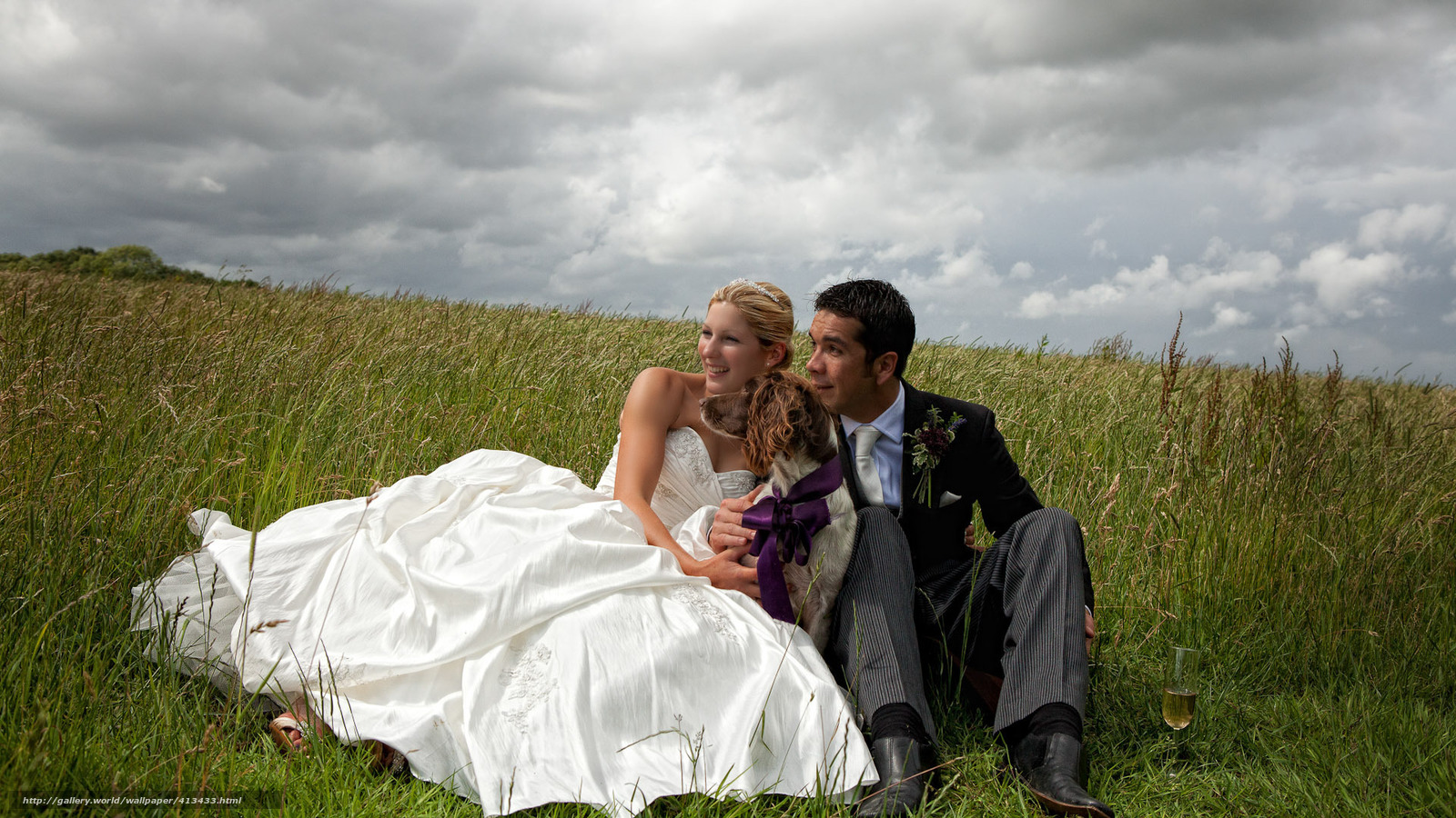Download wallpaper wedding,  field,  dog,  two free desktop wallpaper in the resolution 1920x1080 — picture №413433