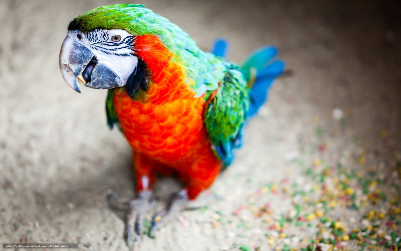 scaricare gli sfondi uccello,  Pappagalli,  sfondo Sfondi gratis per la risoluzione del desktop 1680x1050 — immagine №413962