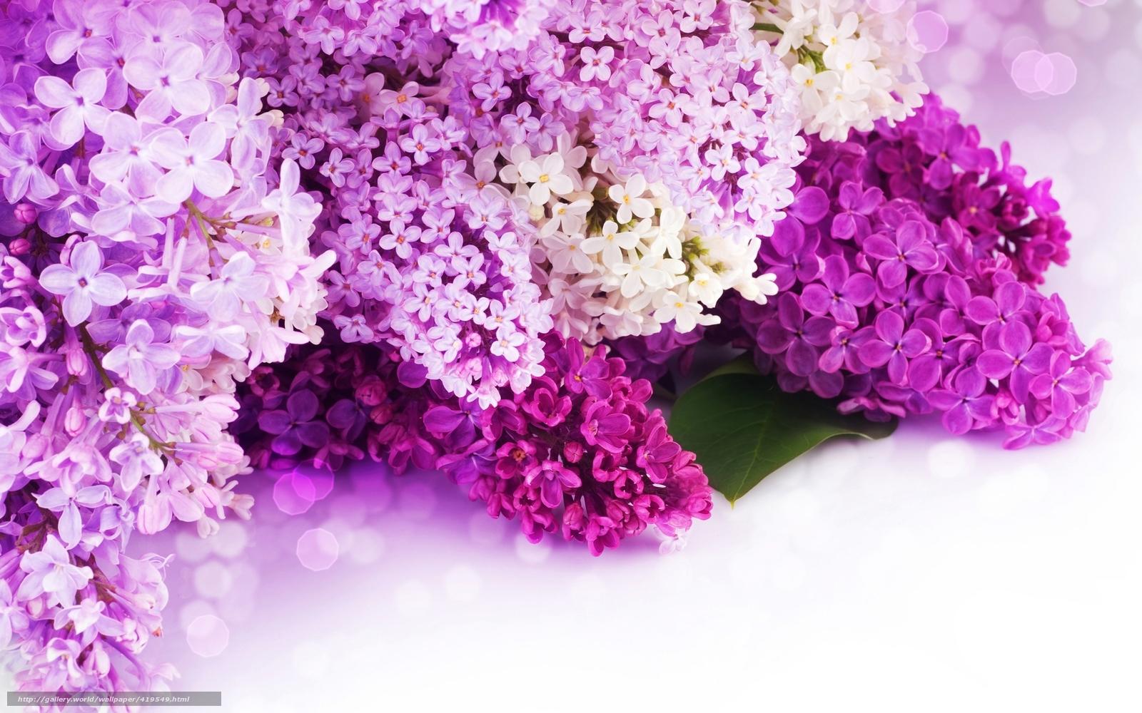 Красивые обои весна на рабочий стол (35 фото) Прикольные