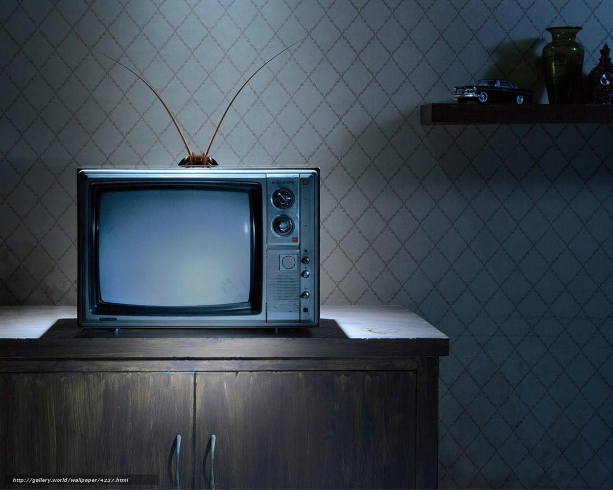 Fernseher Hintergrund download hintergrund nachttisch, fernseher, kchenschabe, schnurrbart